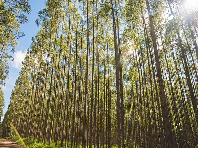 Fluxograma Negócios Florestais