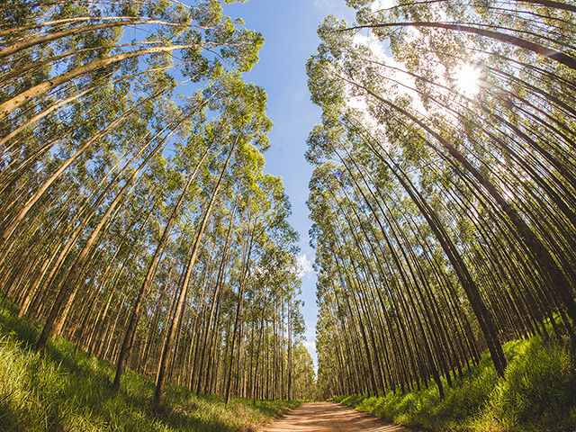 potencial florestal