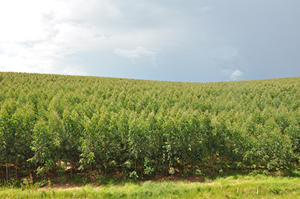 Biomassa: utilizações na indústria