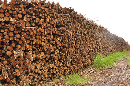 Comercialização de madeira em tora e cavaco: conheça a Potencial Florestal