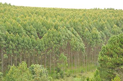 Biomassa diferença entre combustão e gaseificação