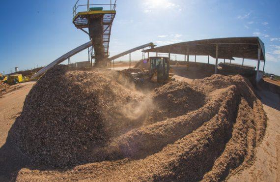 biomassa é a pontencial energia do futuro!