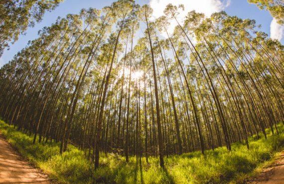 Veja porque a biomassa é a energia do futuro