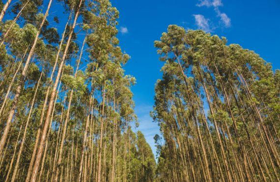 understand all the importance of reforestation wood