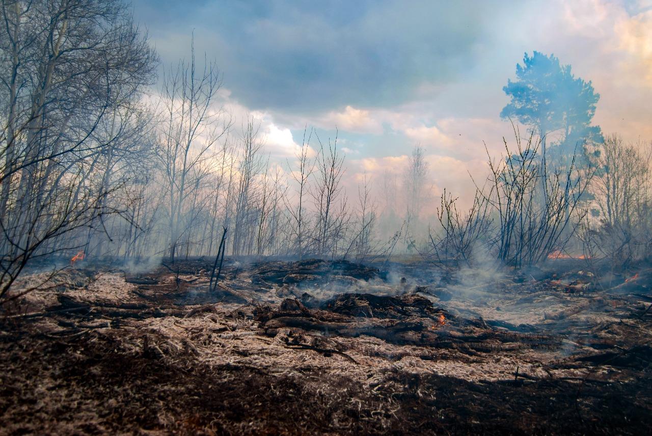reflorestar queimadas