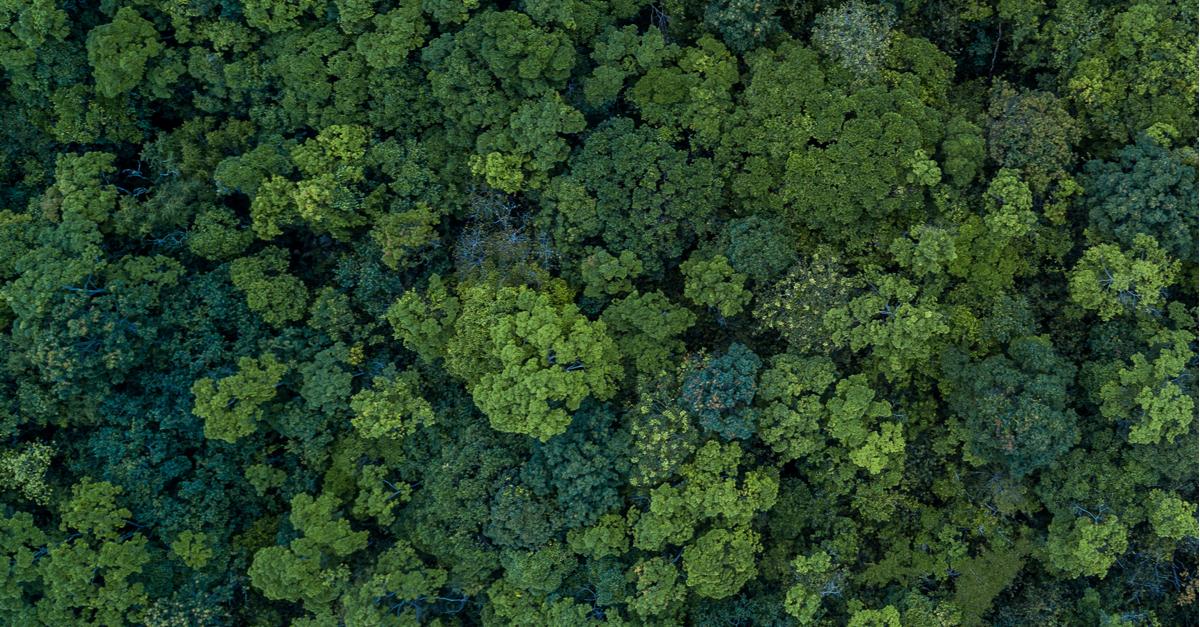 parceria florestal