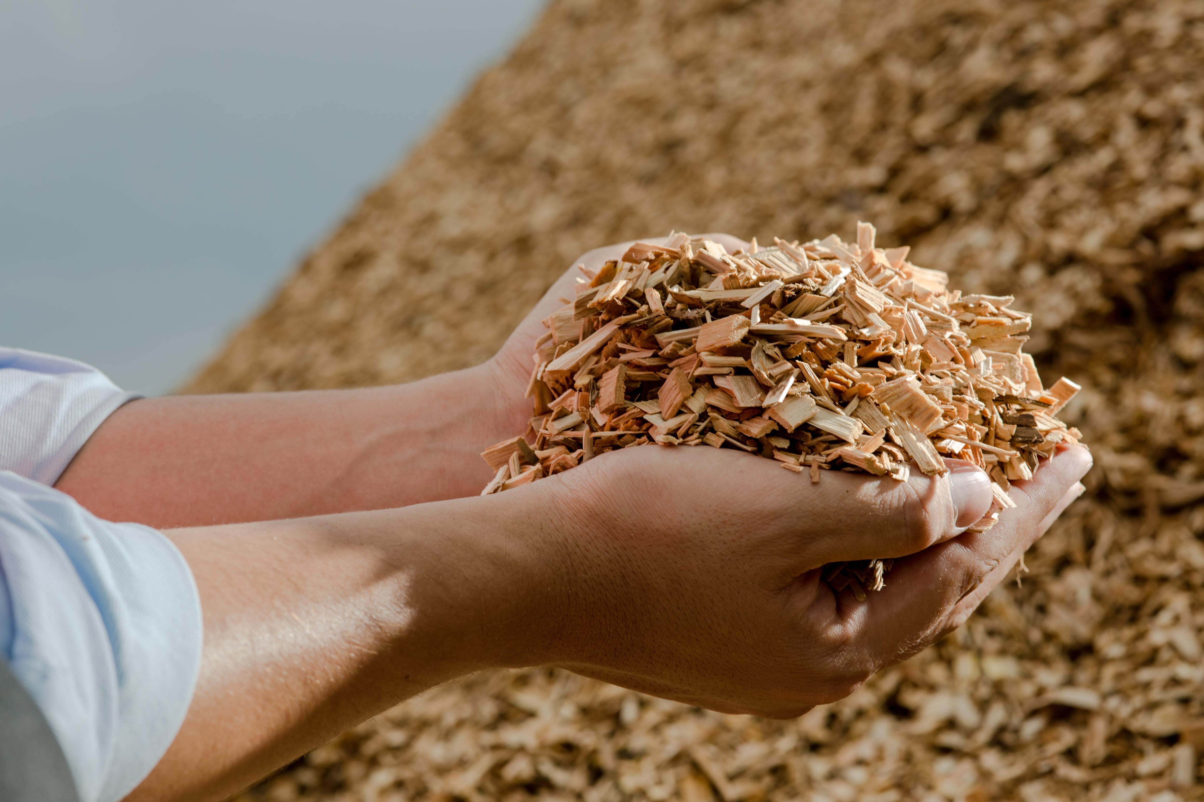 da madeira para a energia