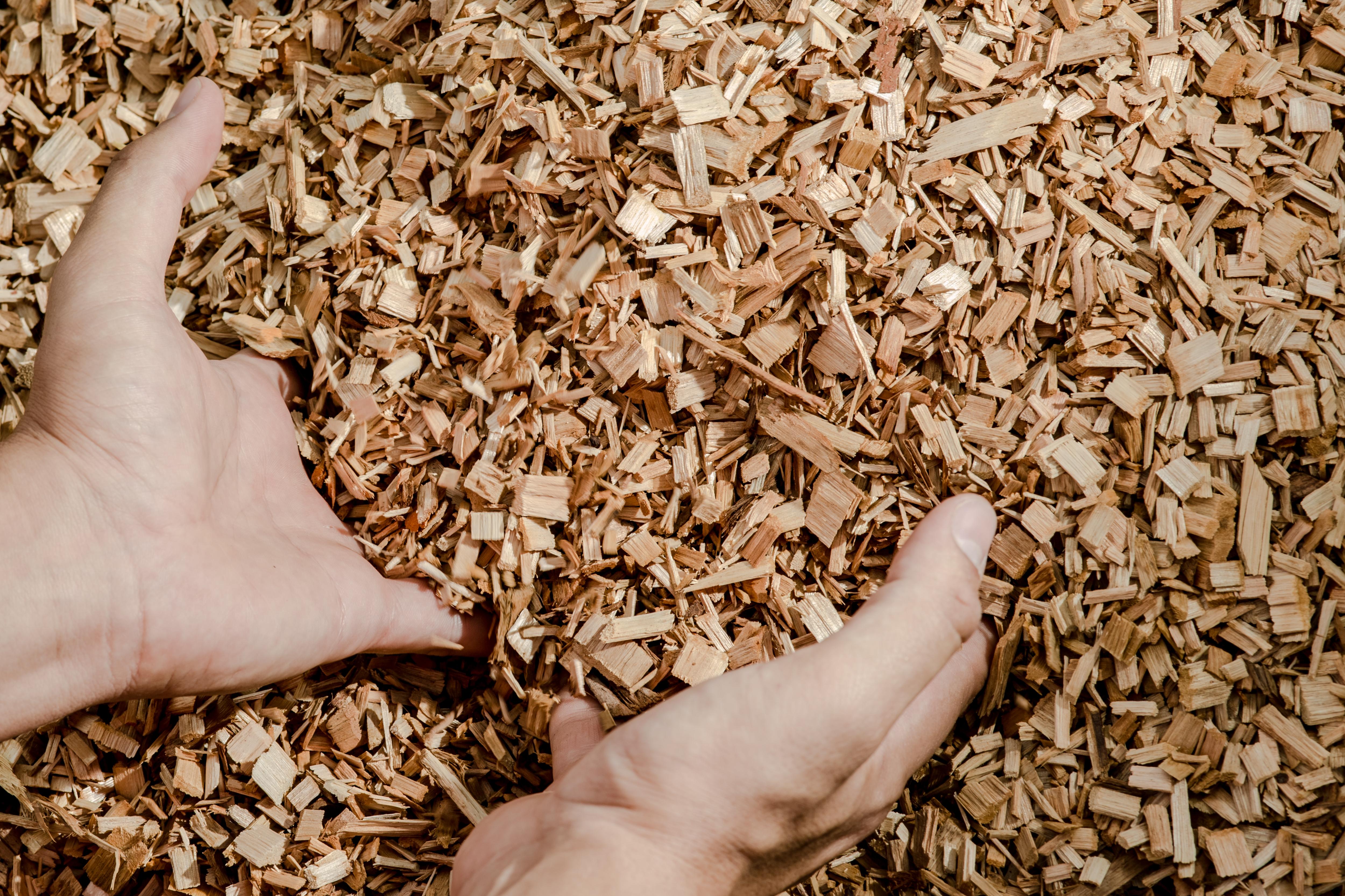 cavaco de eucalipto para a energia