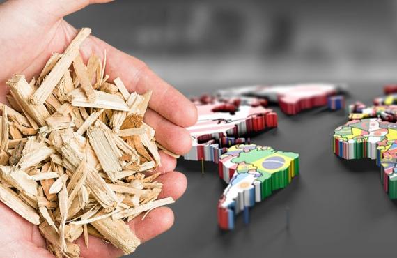 Biomassa, Uma Escolha Mundial.