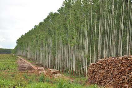 Plantação Potencial Florestal