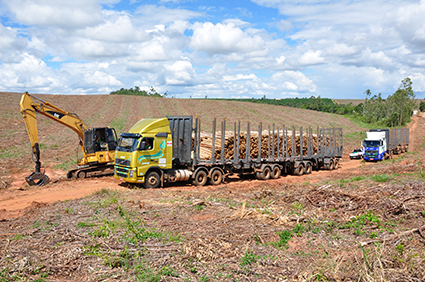 Transporte de Toras de Madeira Potencial Florestal